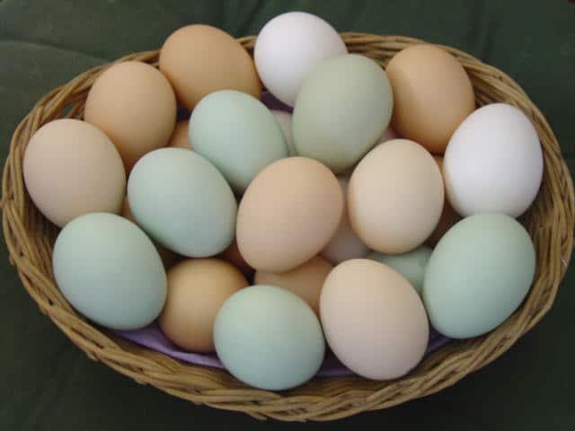 Dicas rápidas: ovos